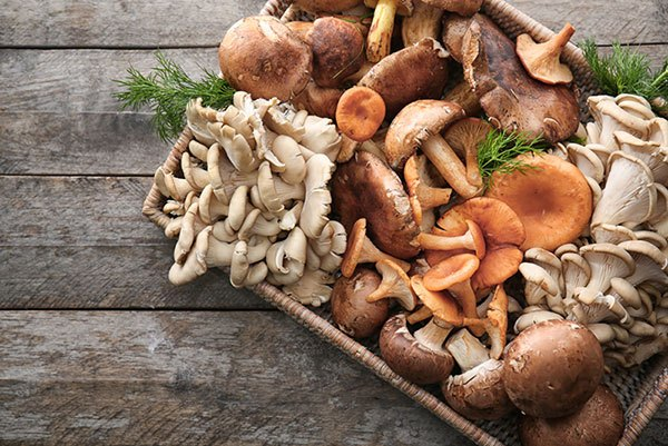 when to harvest golden oyster mushrooms